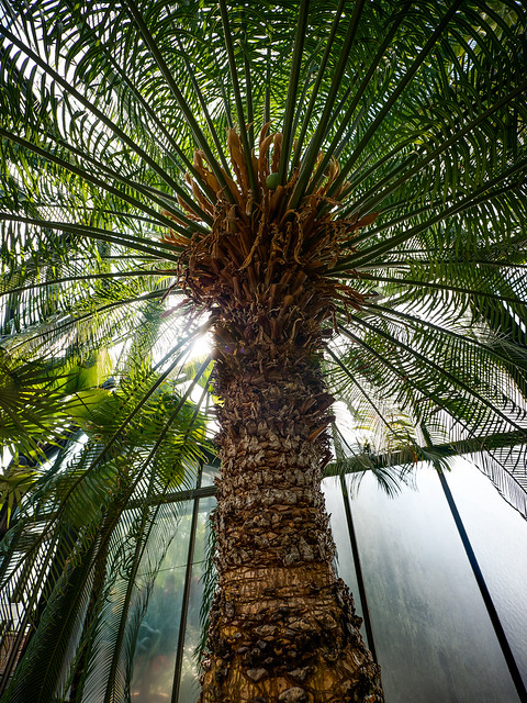 Panasonic 7-14mm Test: Queen Palm Halo
