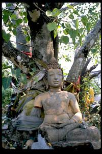 tt_bodhidharma_buddha