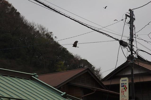 0432 - Kamakura