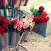spring flowers [5/6] by Aisha Al-Qahtani