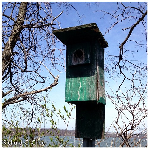 Bird House 1 by rchoephoto