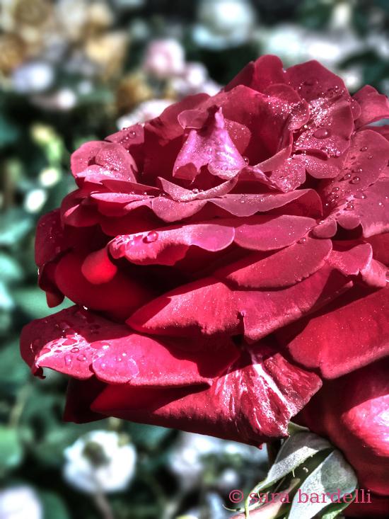 fiori 11