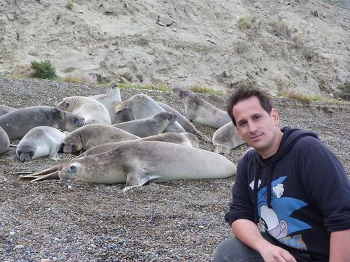 Con los elefantes marinos en Punta Ninfas (Patagonia, Argentina)