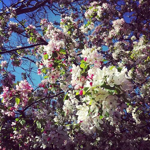 Vill ligga under ett blommande träd. Den känslan.
