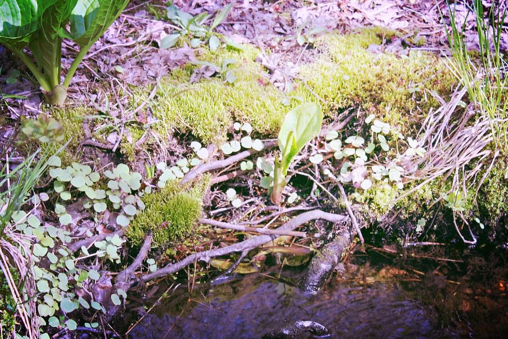 Pond Skimmers Paradise