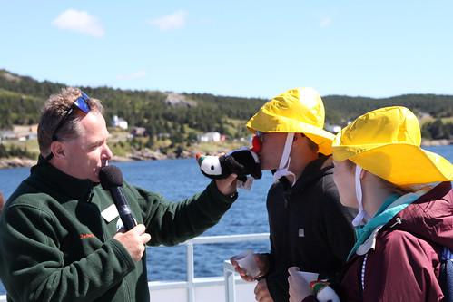2016 canada newfoundlandandlabrador nl witlessbay witlessbayecologicalreserve obriensboattours seabirds