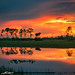 Pine Glades Wetlands Natural Area Sunset Square by Captain Kimo