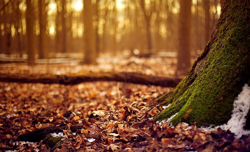 IMAGE: http://farm9.staticflickr.com/8524/8460181306_e2ac53926c_c.jpg