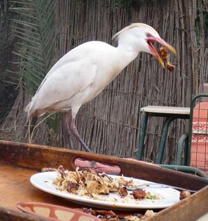 EgyptRestaurant-6