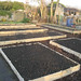 Plot 3 - new beds