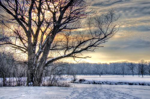 trees winter snow nature hdr nikkor18300mm bigbendlake