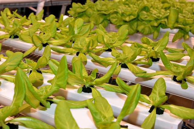 Should Hydroponically Grown Food Be Able To Be Labeled Organic