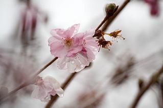 Spring is starting to spring!