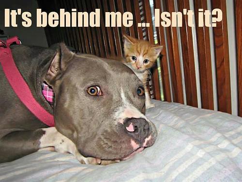 dog behind me kitteh