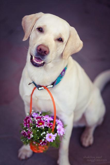 Joy meets Spring