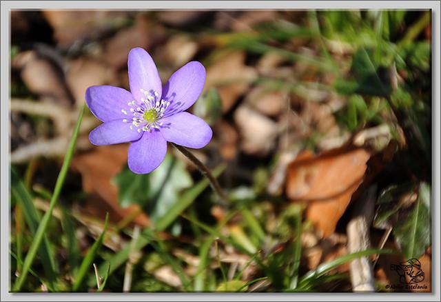 1 Flores