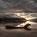 Remnants of Nessie !    Loch Long, Arrochar, Scotland by Anir Pandit's Photo Art