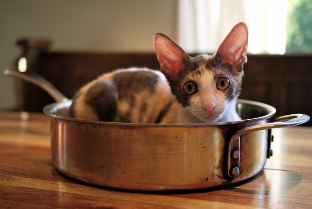 Fetch Z D Cat Food