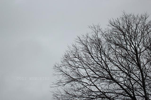 rainy March