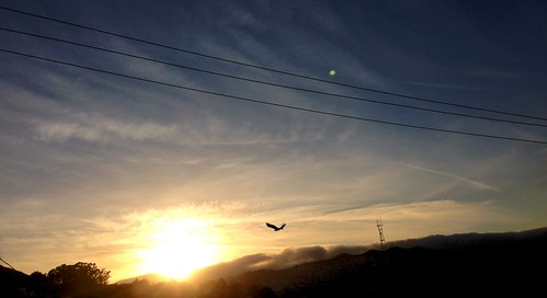 Red-tailed hawk, Sutro tower, and beautiful sunset from Bernal Heights.