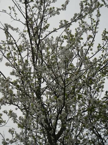 DSCN6047 - Spring Flowers