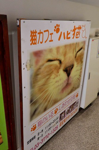 Hapineko Cat Cafe