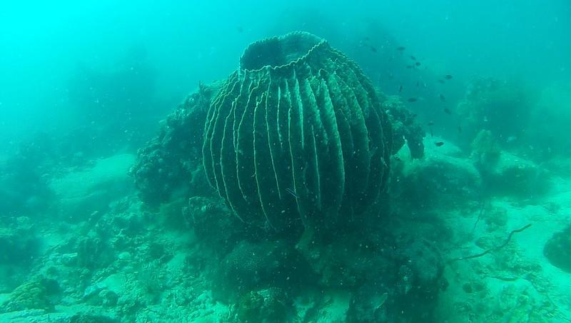 sukellus6