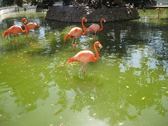 2013-01-cuba-218-camaguey-zoo