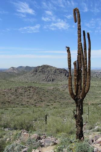 Arizona22