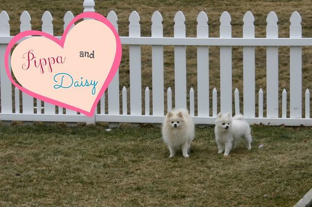 Pippa & Daily