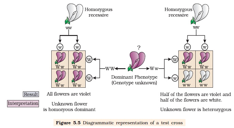 NCERT Class XII Biology Chapter 5 : Principles Of ...