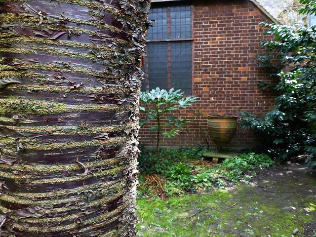 Lewisham garden