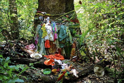 anyone know why clothes are tied to this tree?