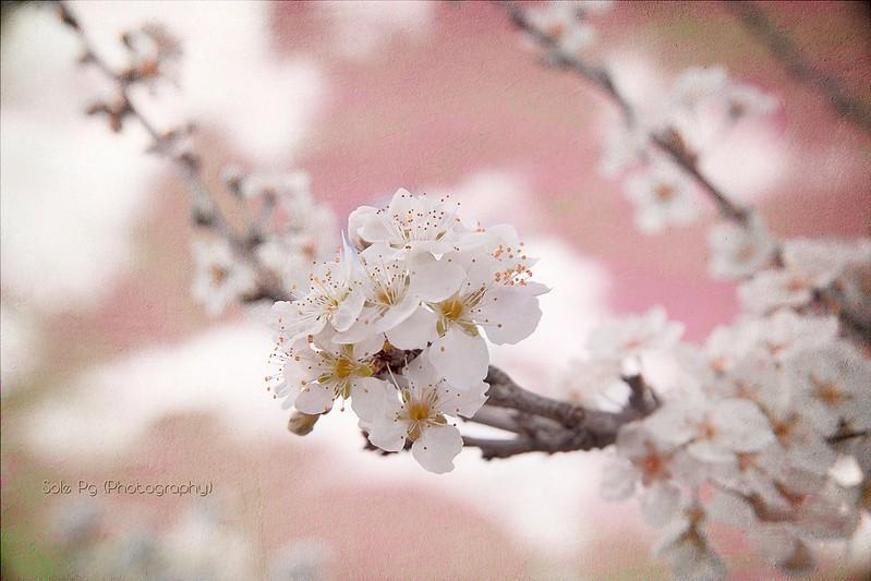 Ya esta aqui, sin dudarlo Primavera Bella.