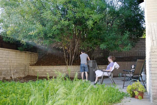backyard  039