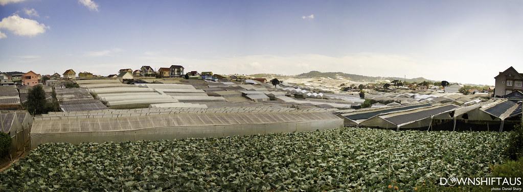 Vietnam Crops