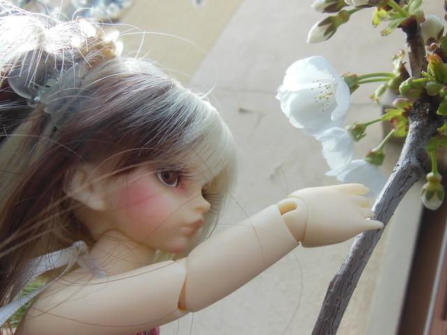 [Toulouse] Résine et fleurs de cerisier 8628534587_702436abc1_z