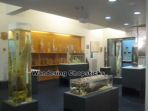 4 Icelandic Phallological Museum - Reykjavik - Iceland 11