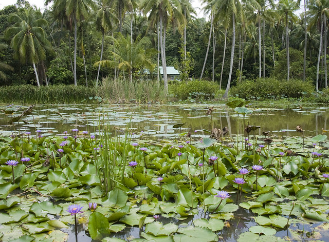 Kampong from the lily pond at Pulau Ubin