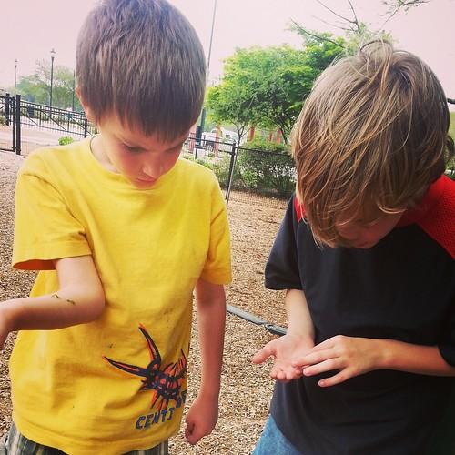 inchworm gathering