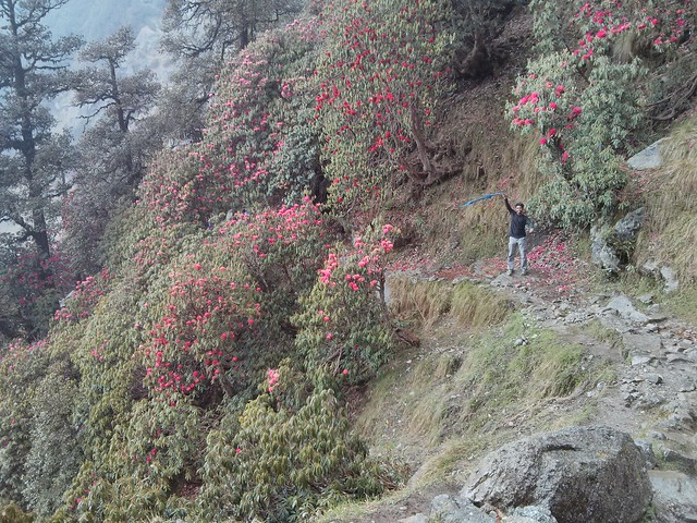 Triund trek route