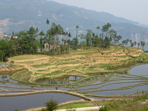 Yunnan13-Yuanyang 3-Huangcaoling (5)