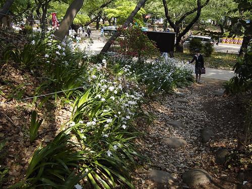 Iris japonica by leicadaisuki