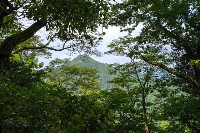 山道の木々より見る大高山