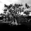 20160920_0538-metal-tree-sculpture