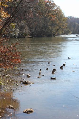 Chattahoochie River
