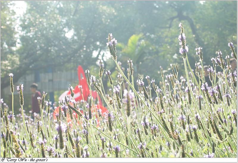 2013-02-12 是賞花還是賞人頭的中山公園百花祭-7