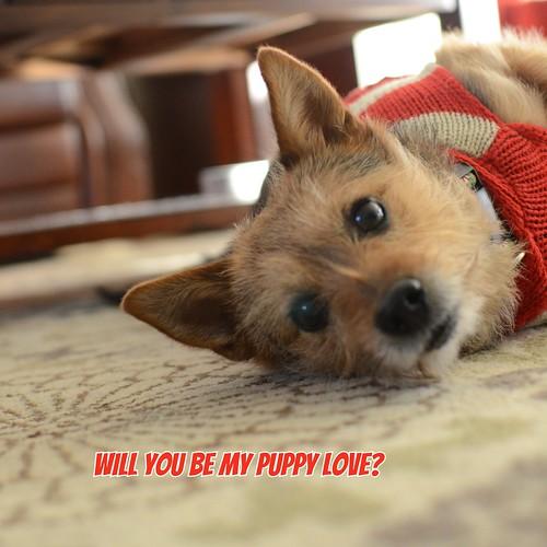 Dog Valentine #4