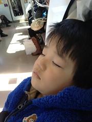 電車で寝るとらちゃん 2013/2/23