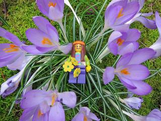 LEGO Collectible Minifigures Series 7 : Hippy